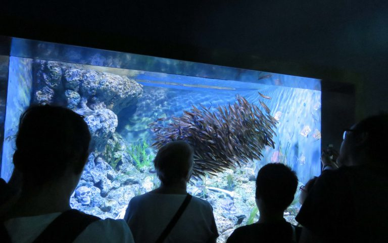 Aquarium d'ensemble