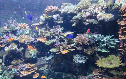 Décors coraux