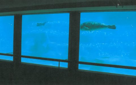Bassin des phoques