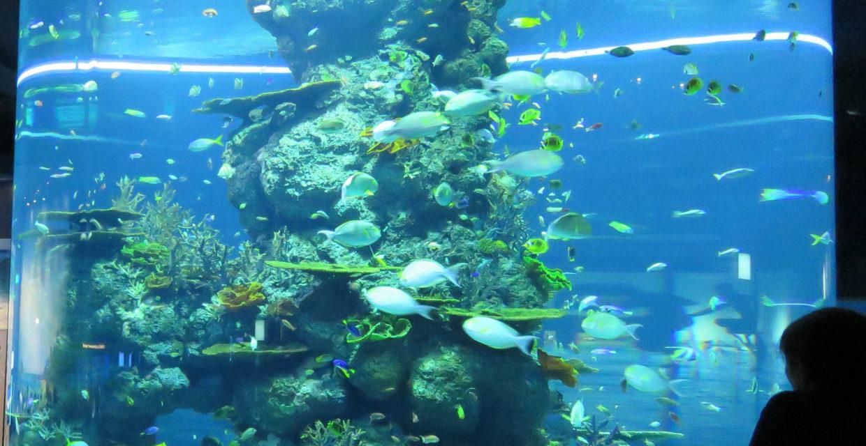 Aquarium colonne