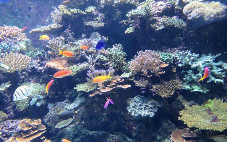 Décor coralien