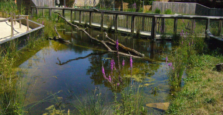 Bassin Zoo