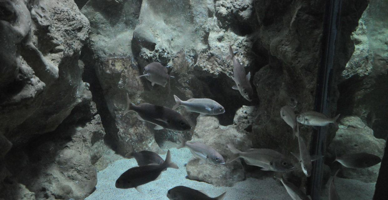 Décor rocheux aquarium