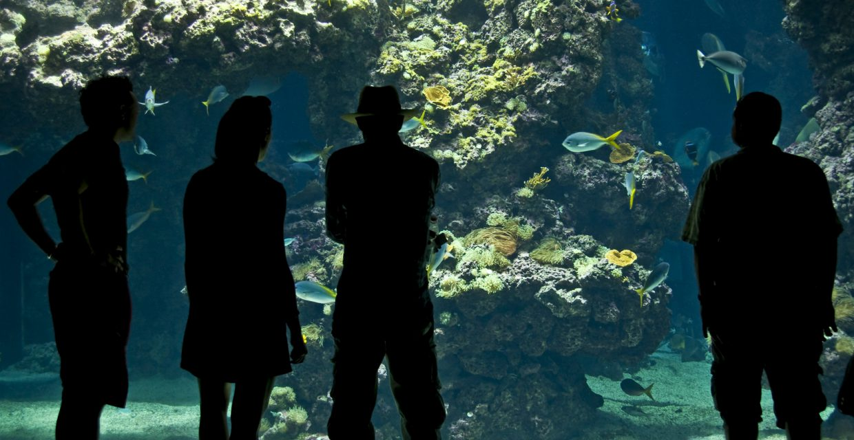 Musée océanographique aquarium de Monaco
