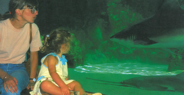 Bassin requins